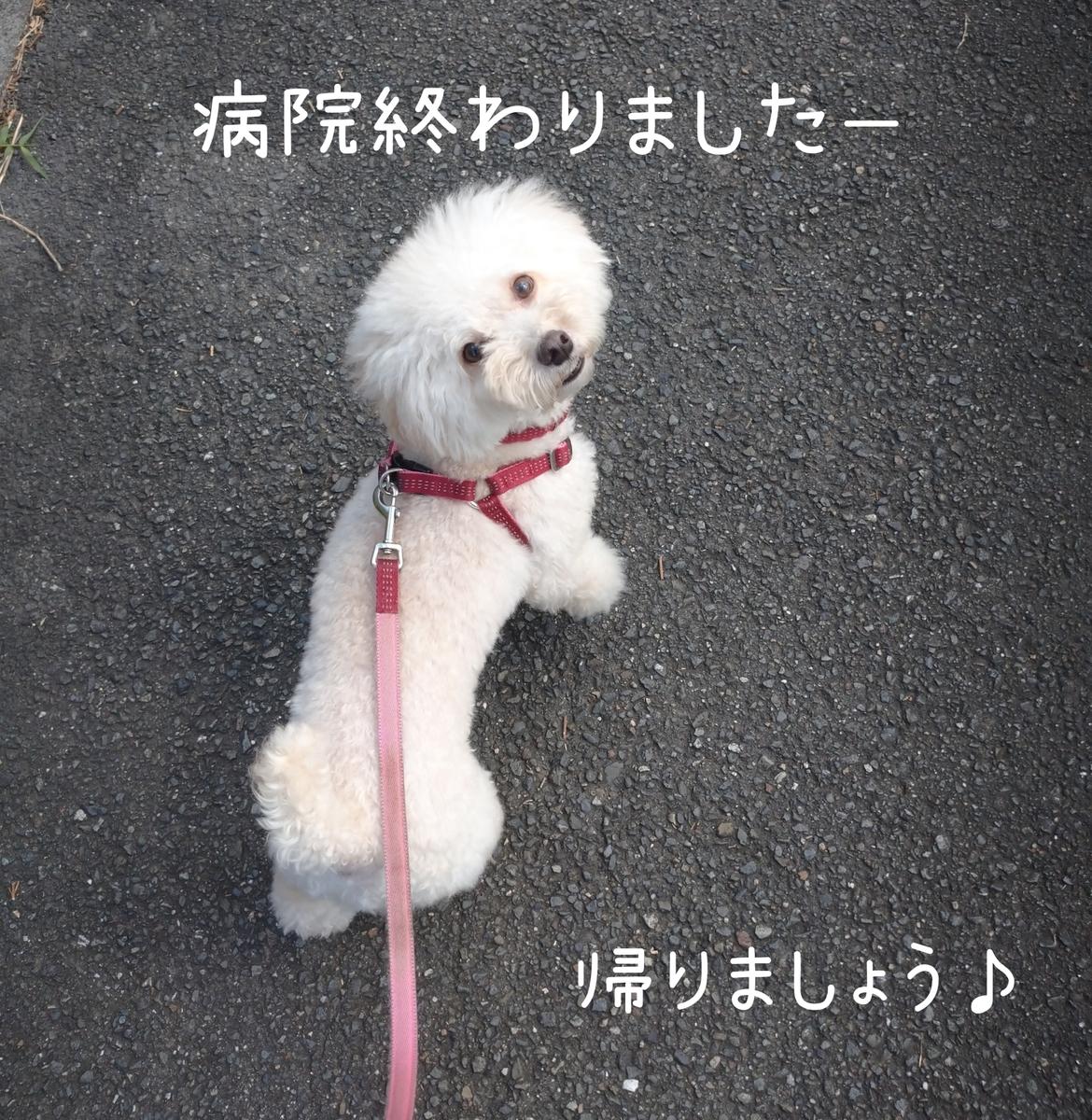 f:id:kotaro-dog:20210811023720j:plain