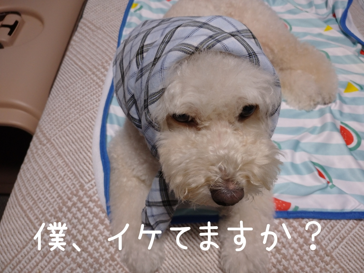 f:id:kotaro-dog:20210813002019j:plain