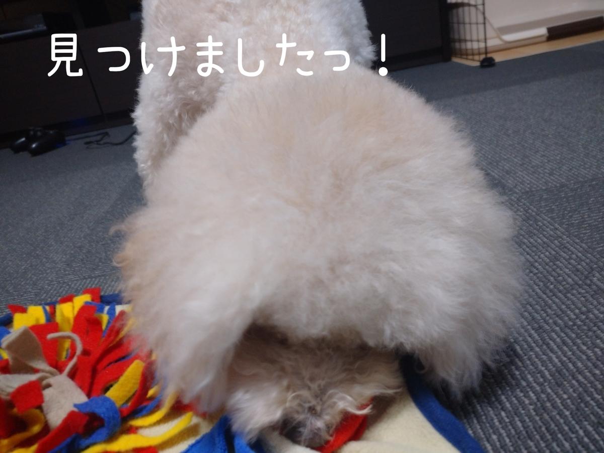 f:id:kotaro-dog:20210813002639j:plain