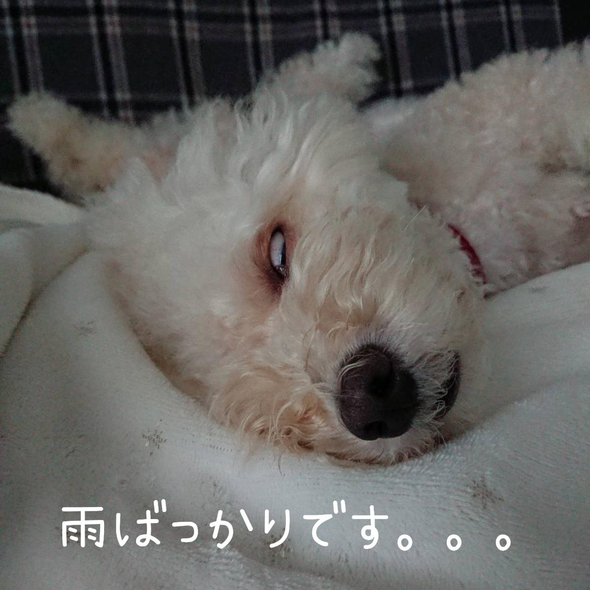 f:id:kotaro-dog:20210814223928j:plain