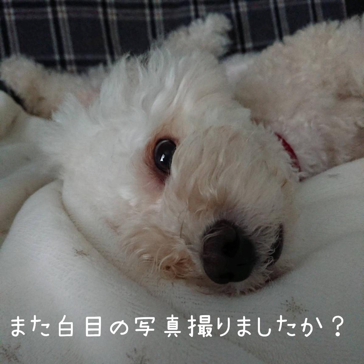 f:id:kotaro-dog:20210814231746j:plain