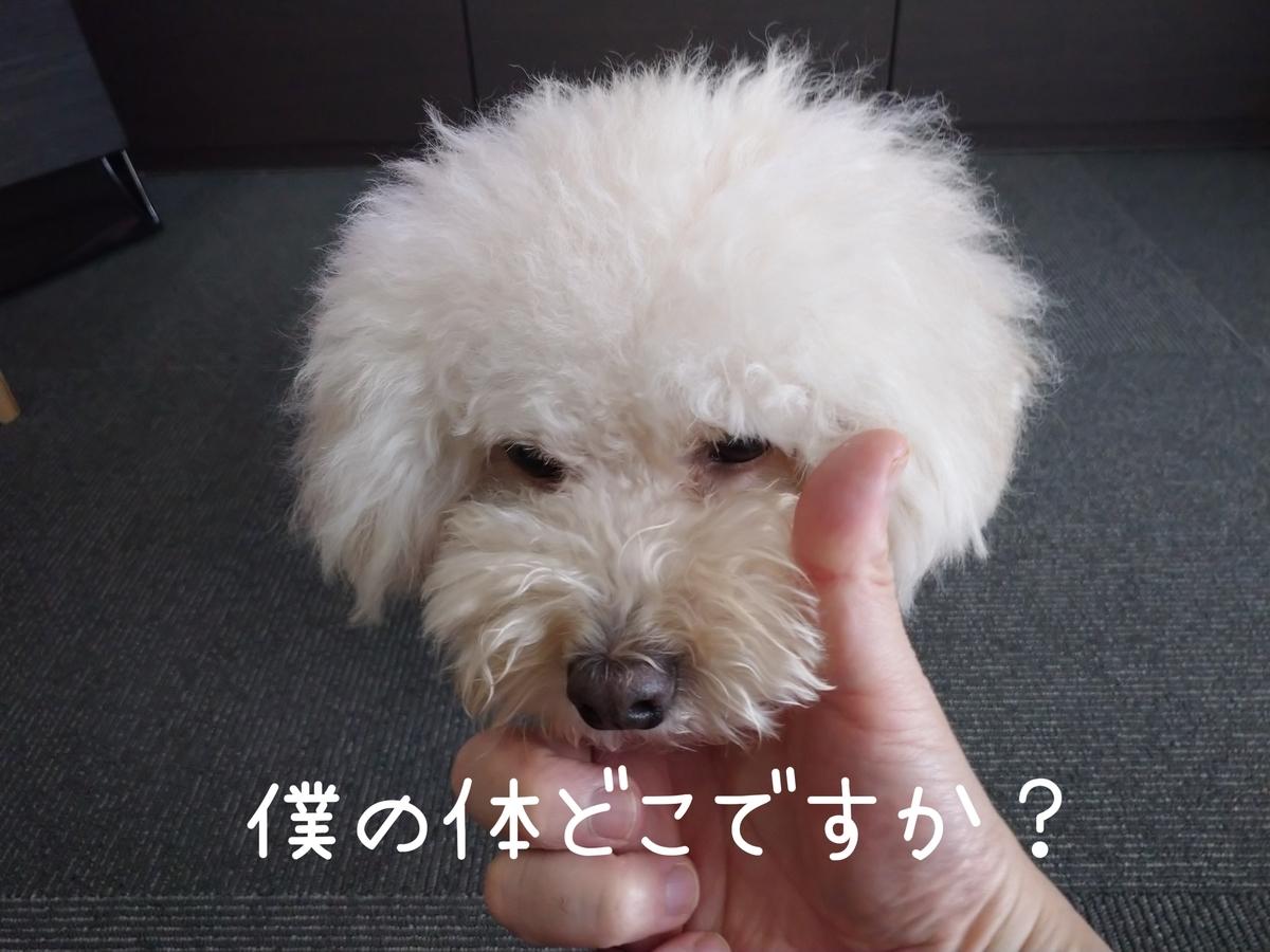 f:id:kotaro-dog:20210815192509j:plain