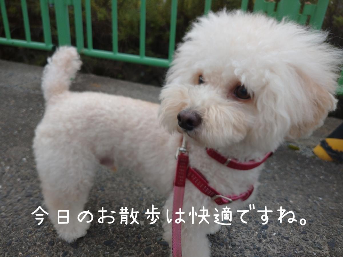 f:id:kotaro-dog:20210815192557j:plain