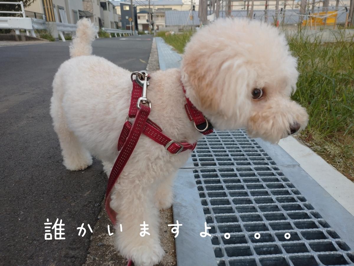 f:id:kotaro-dog:20210815192718j:plain