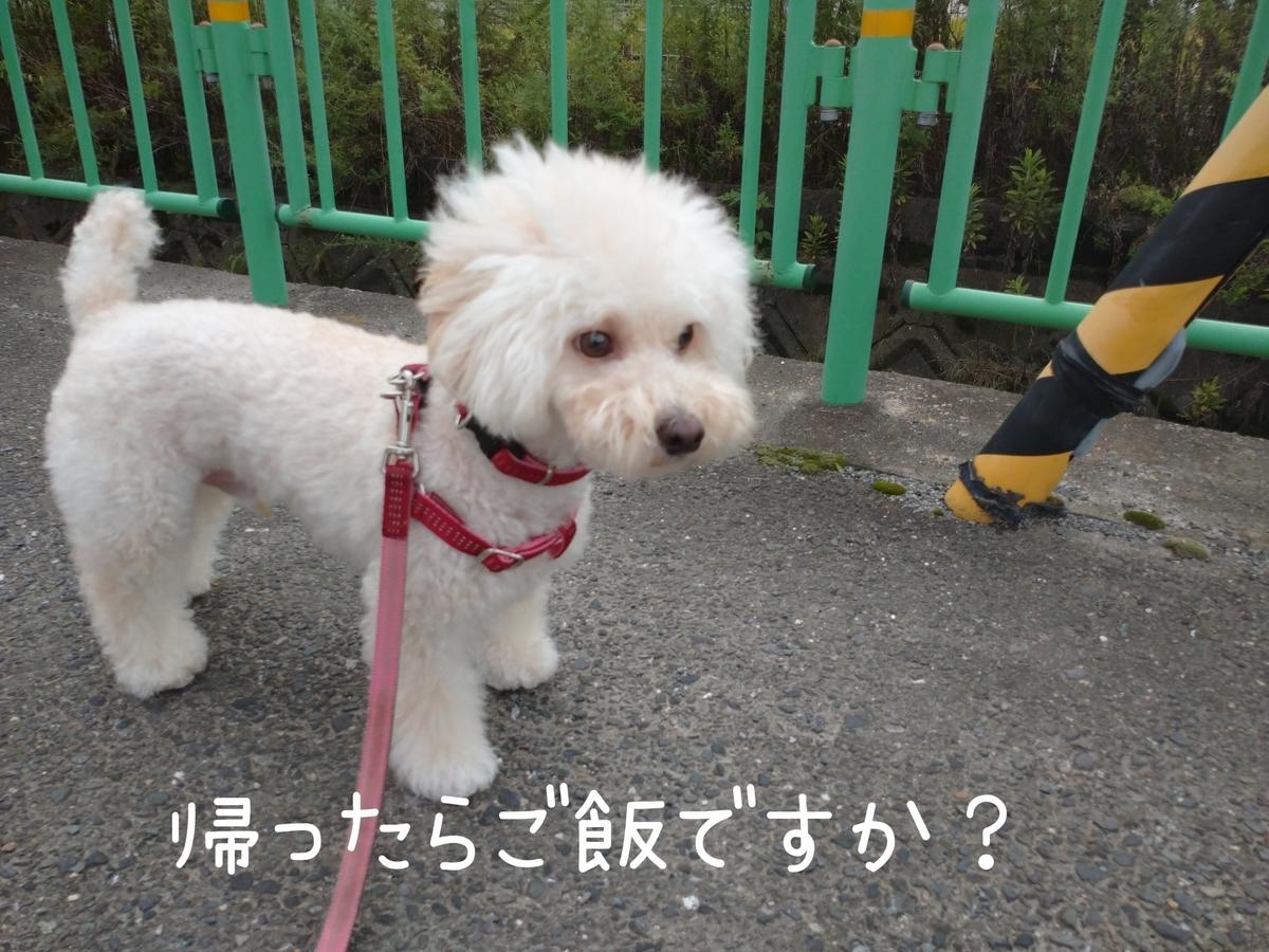 f:id:kotaro-dog:20210815193922j:plain