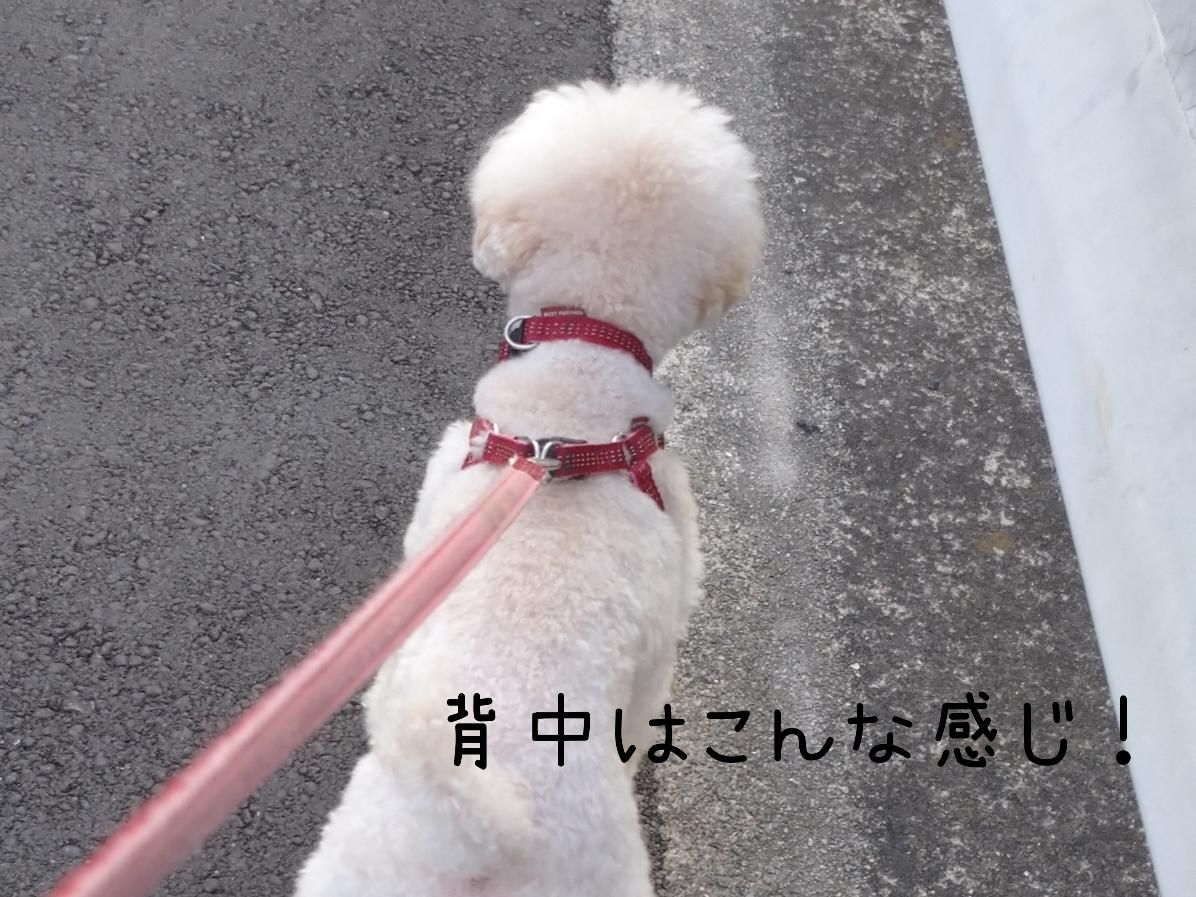 f:id:kotaro-dog:20210817235904j:plain