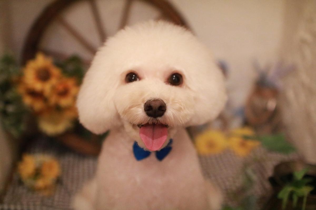 f:id:kotaro-dog:20210821221640j:plain