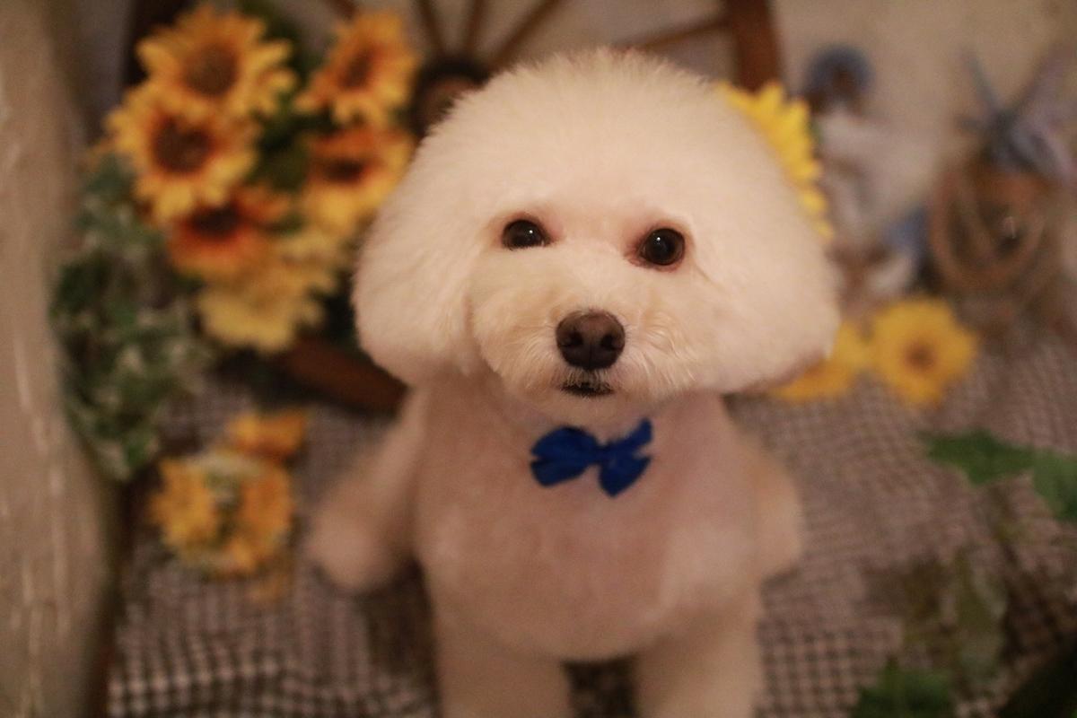 f:id:kotaro-dog:20210821223720j:plain