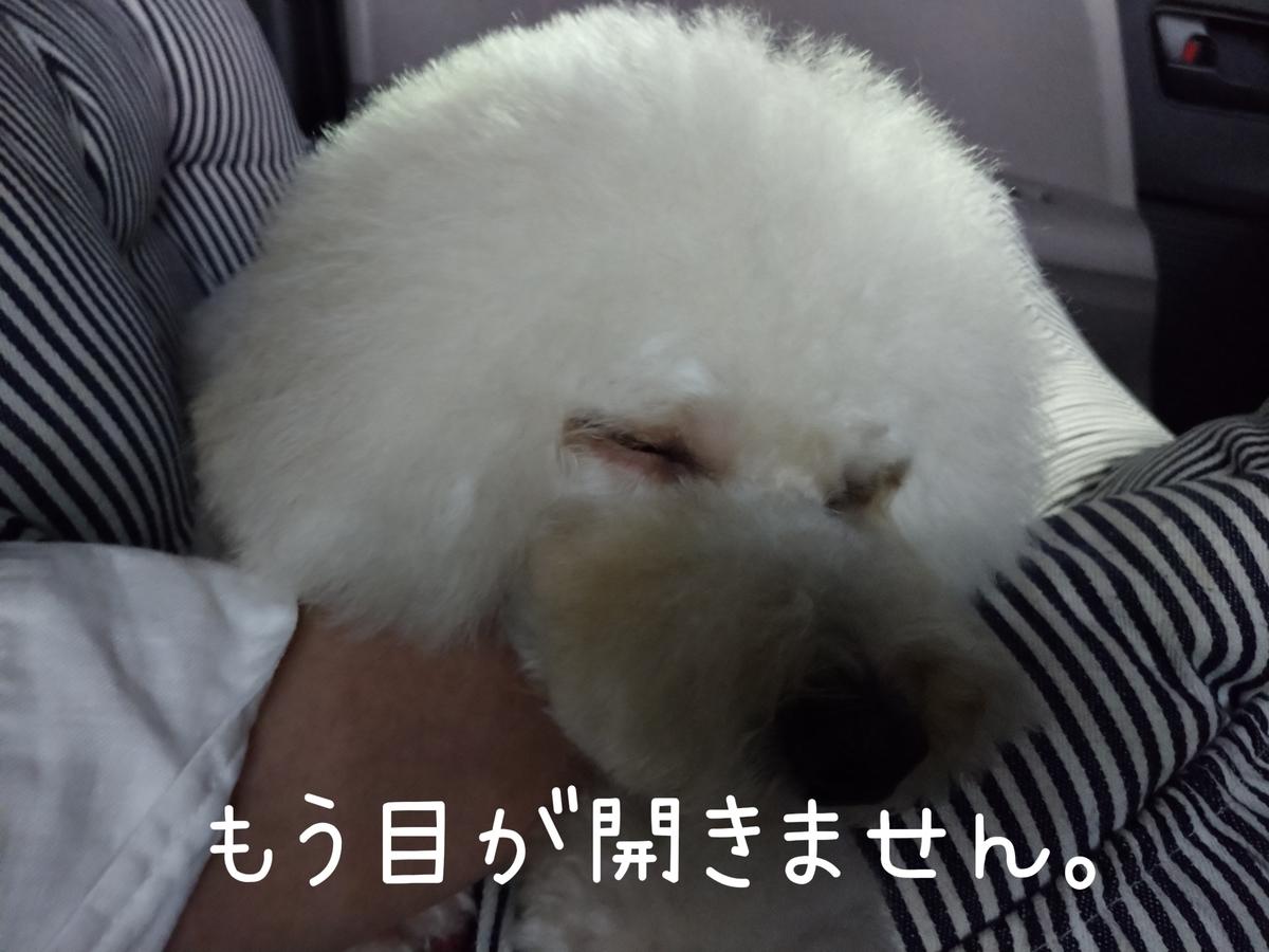 f:id:kotaro-dog:20210821224738j:plain