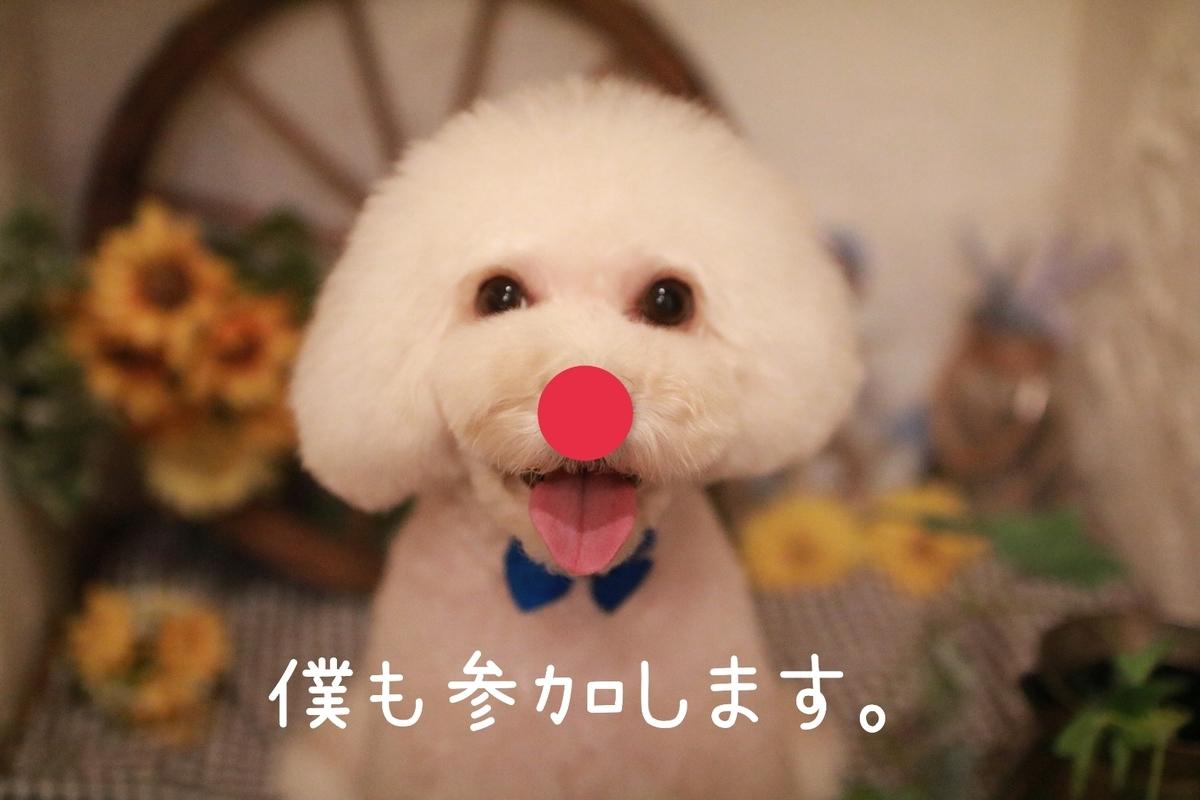 f:id:kotaro-dog:20210822220146j:plain