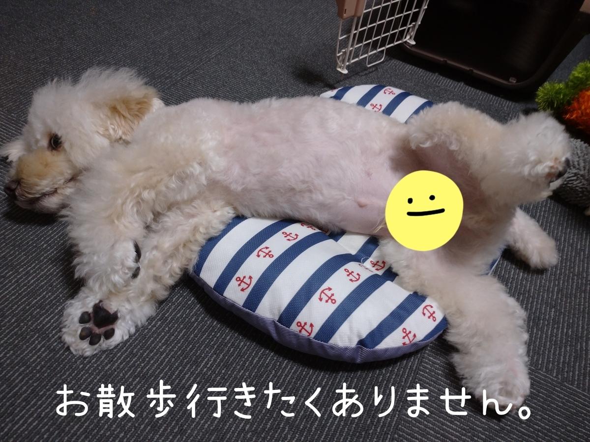 f:id:kotaro-dog:20210826232141j:plain