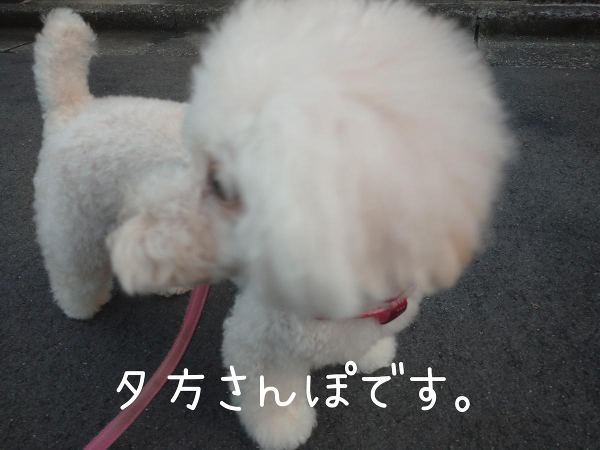 f:id:kotaro-dog:20210829210517j:plain