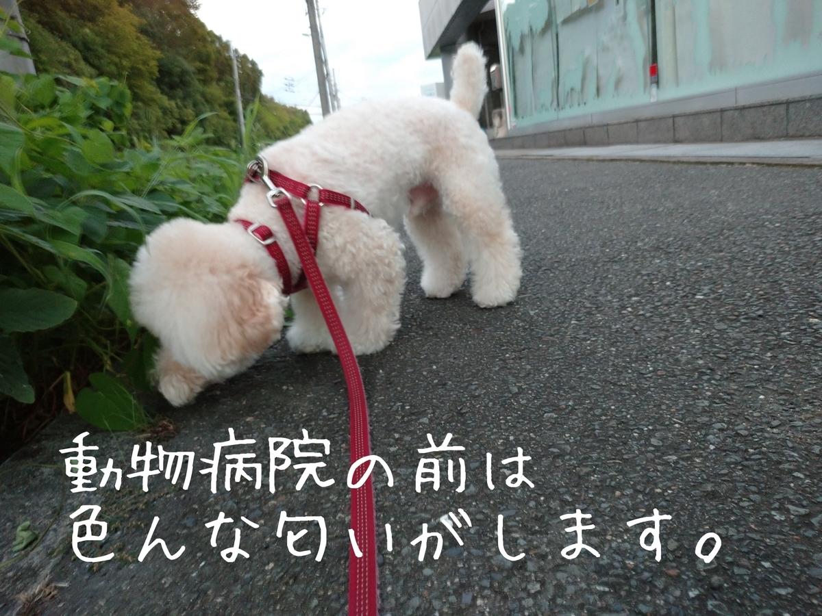 f:id:kotaro-dog:20210829213247j:plain