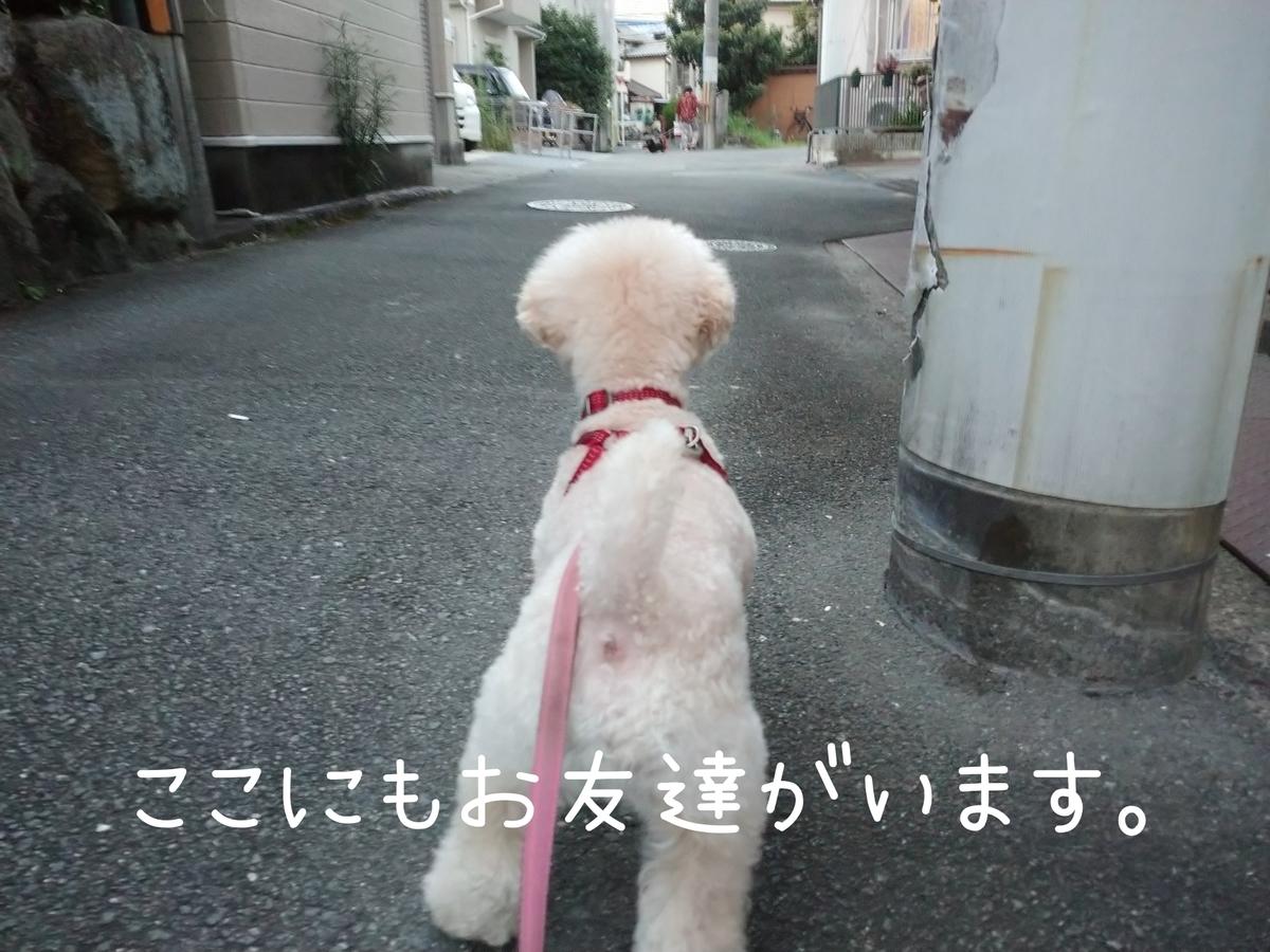 f:id:kotaro-dog:20210829213342j:plain