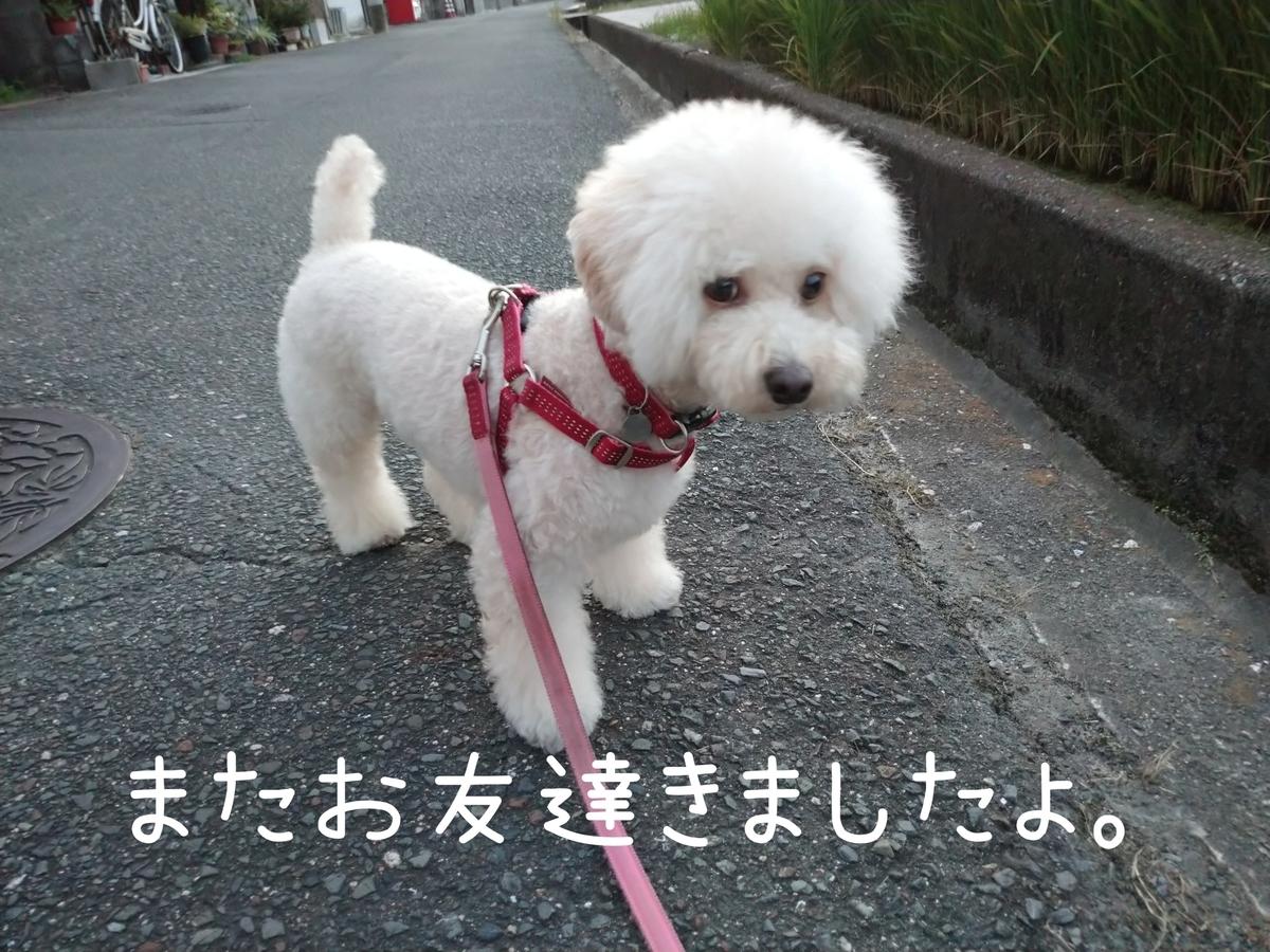 f:id:kotaro-dog:20210829213418j:plain