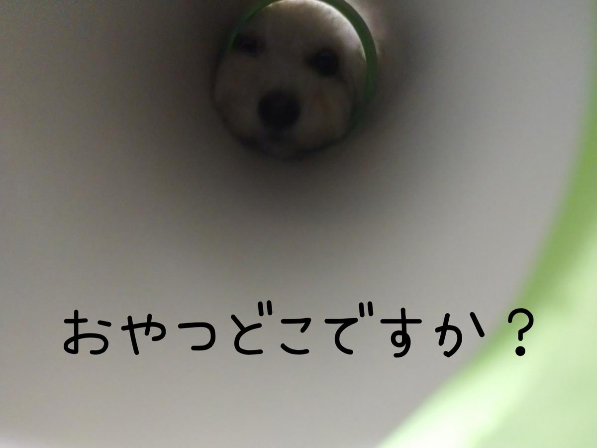 f:id:kotaro-dog:20210831003335j:plain