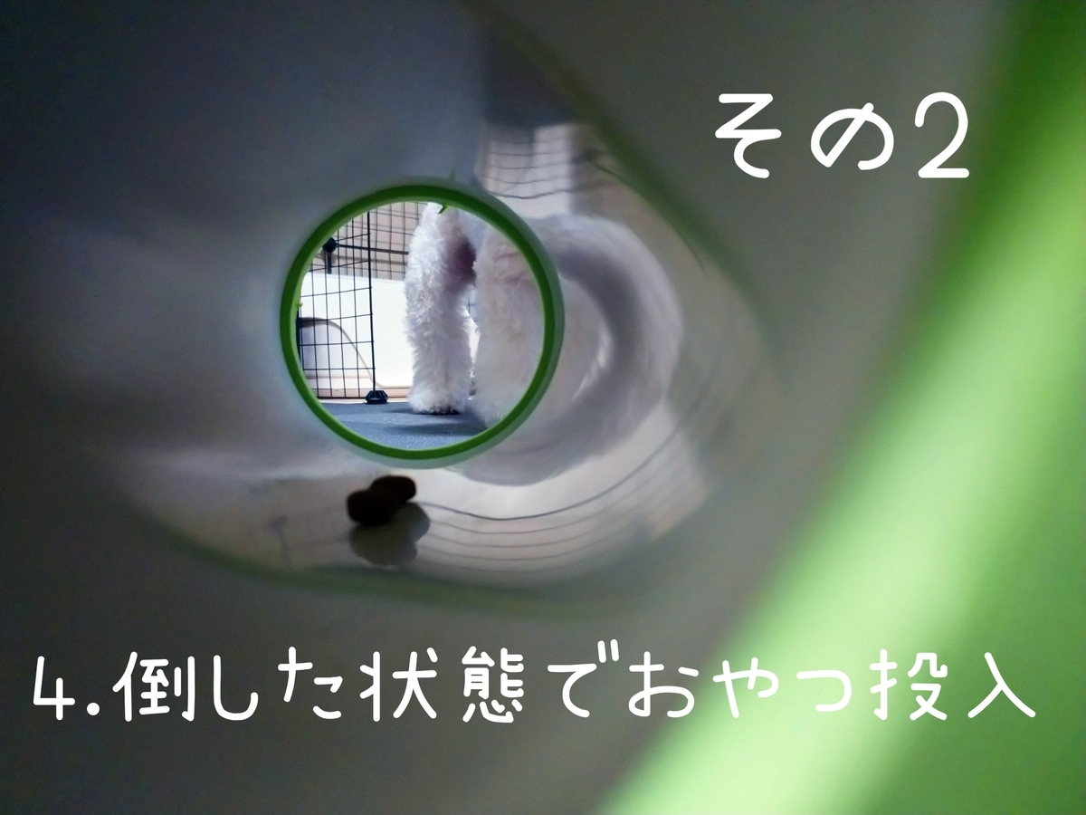 f:id:kotaro-dog:20210831004358j:plain