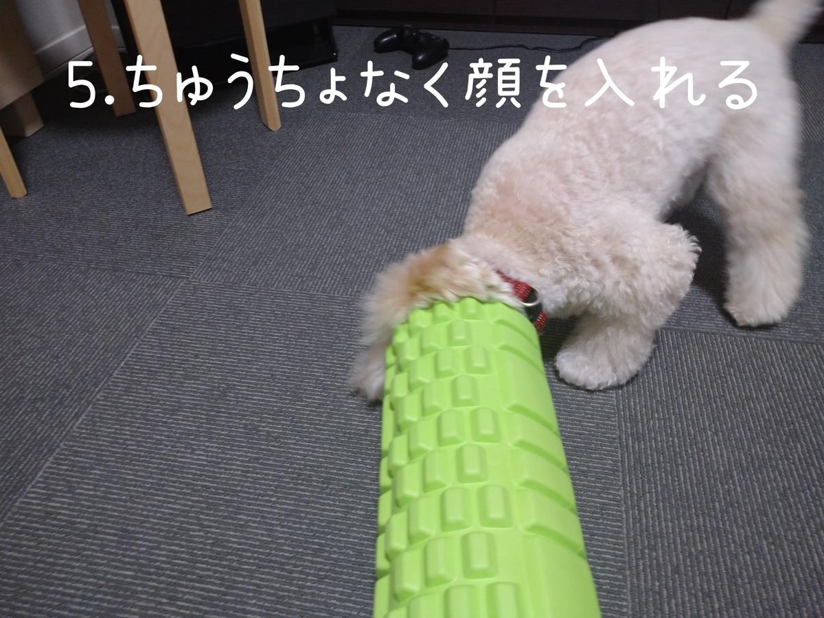 f:id:kotaro-dog:20210831004433j:plain