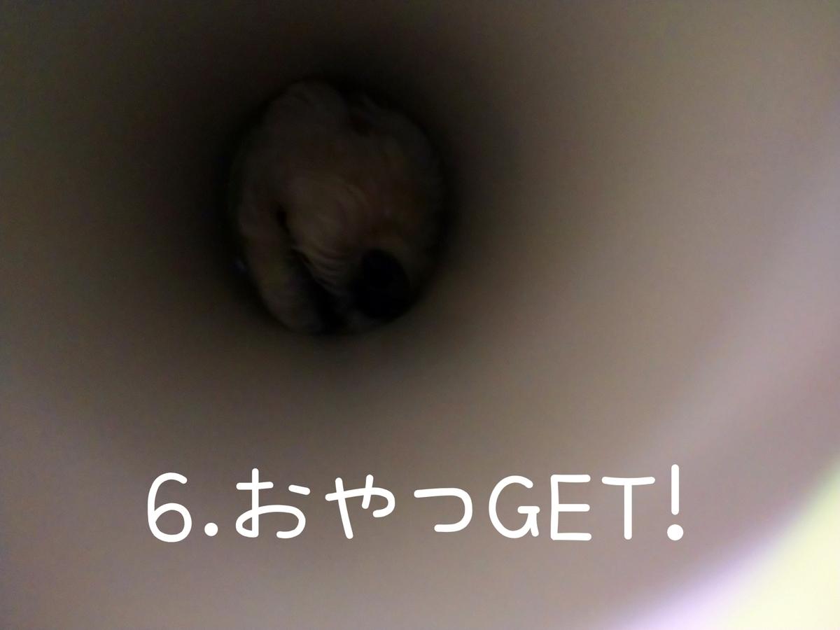 f:id:kotaro-dog:20210831004525j:plain