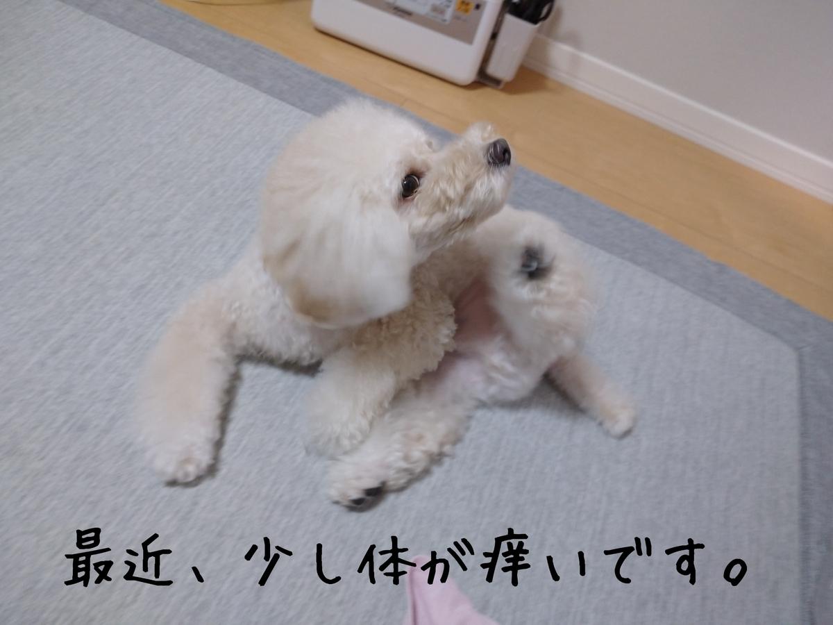 f:id:kotaro-dog:20210902010141j:plain