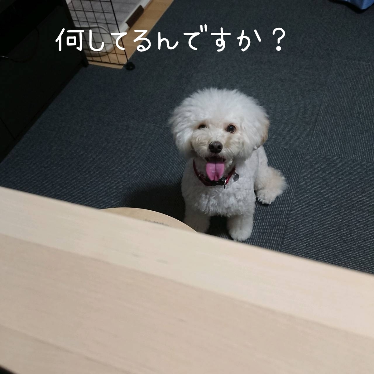 f:id:kotaro-dog:20210904005028j:plain