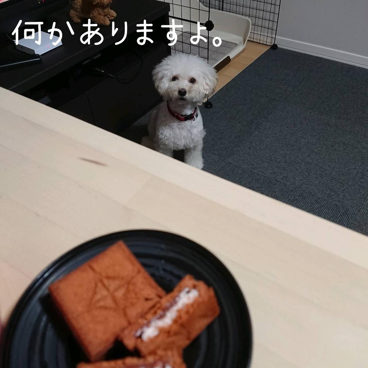 f:id:kotaro-dog:20210904005055j:plain