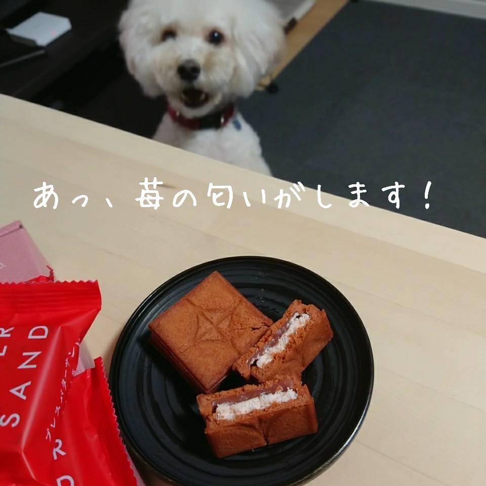 f:id:kotaro-dog:20210904005145j:plain