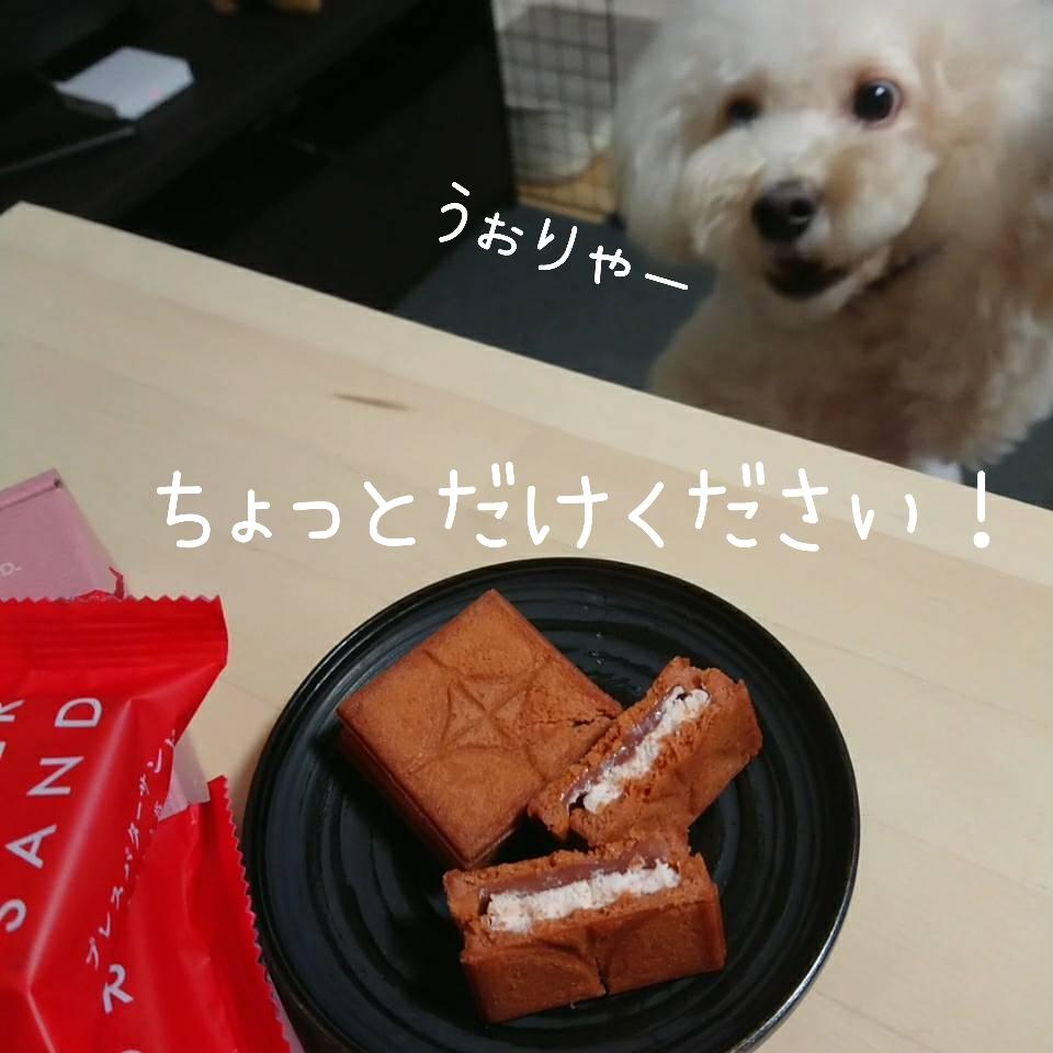 f:id:kotaro-dog:20210904005209j:plain