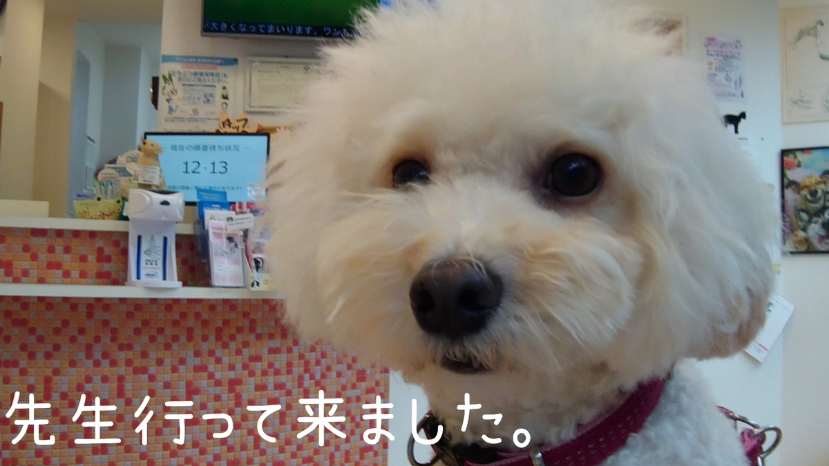 f:id:kotaro-dog:20210904170053j:plain
