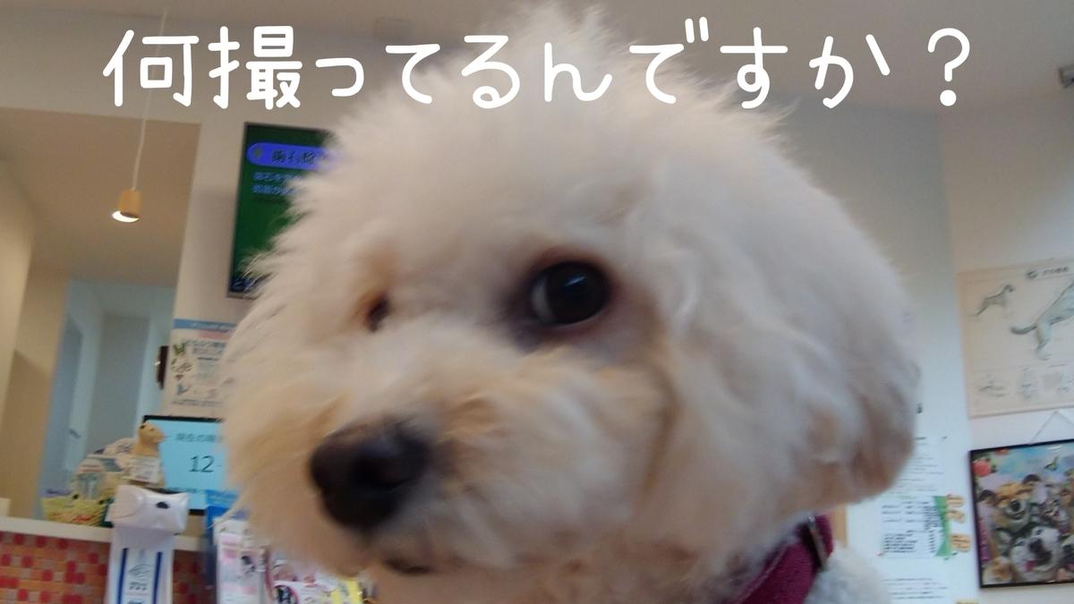 f:id:kotaro-dog:20210904174639j:plain