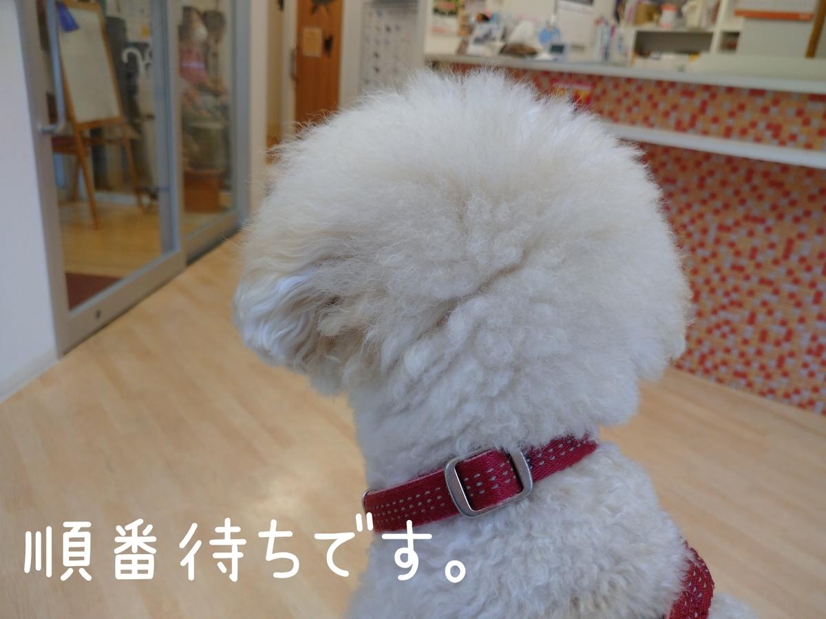 f:id:kotaro-dog:20210904174708j:plain