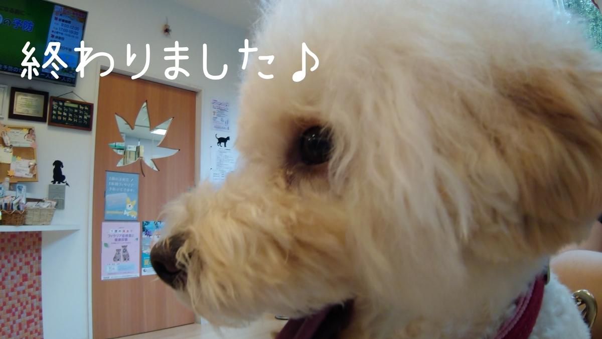 f:id:kotaro-dog:20210904181418j:plain