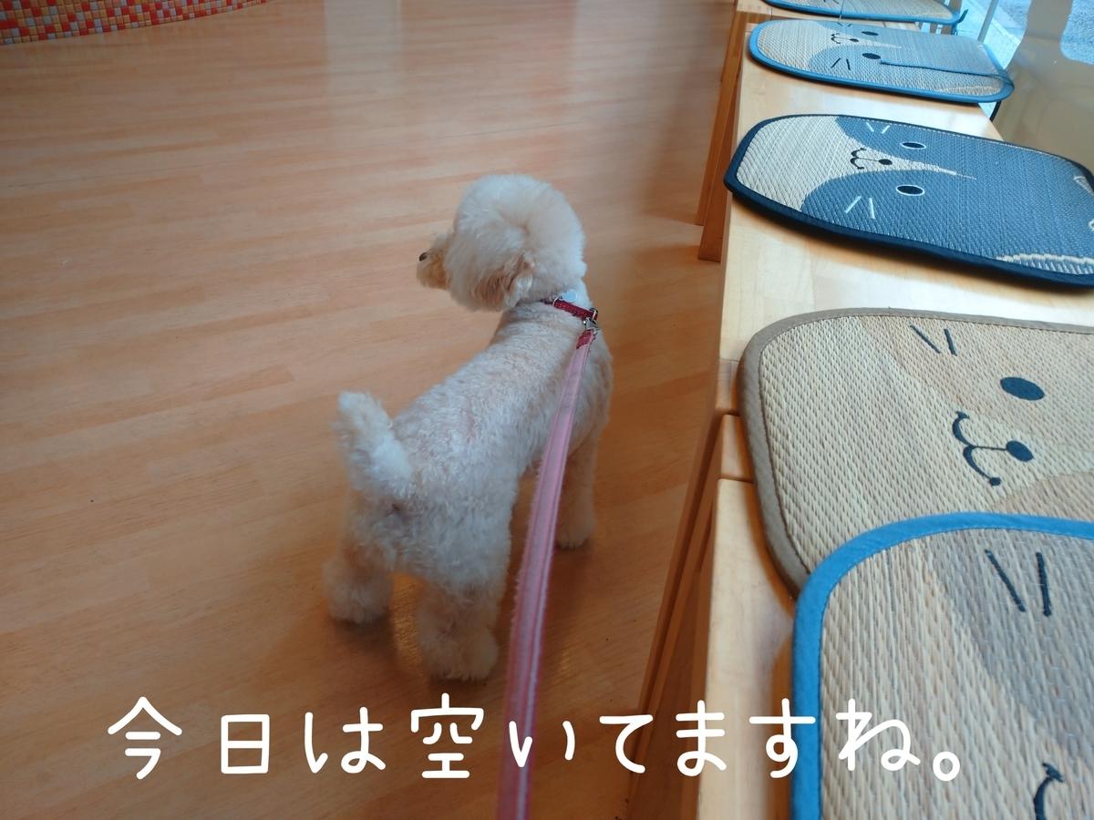 f:id:kotaro-dog:20210904181441j:plain