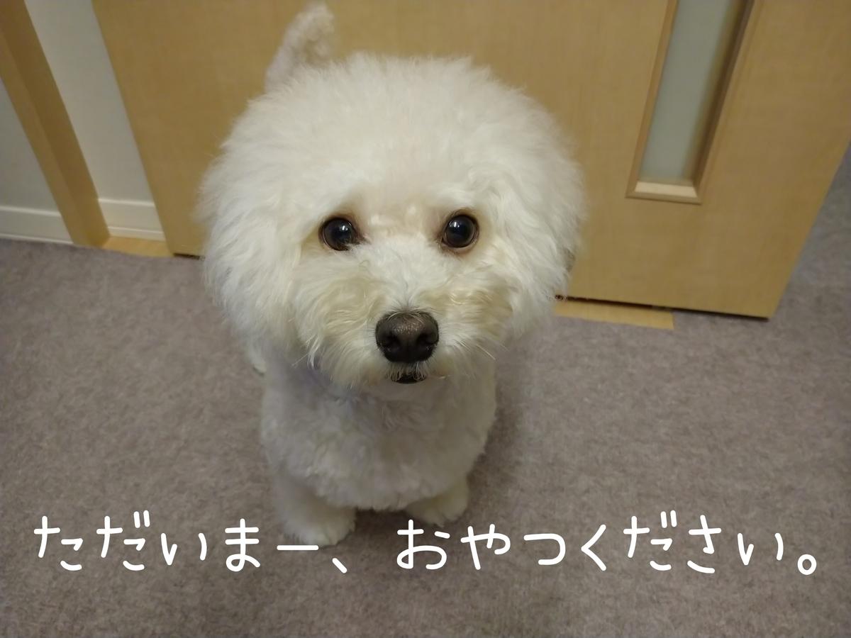 f:id:kotaro-dog:20210904183421j:plain