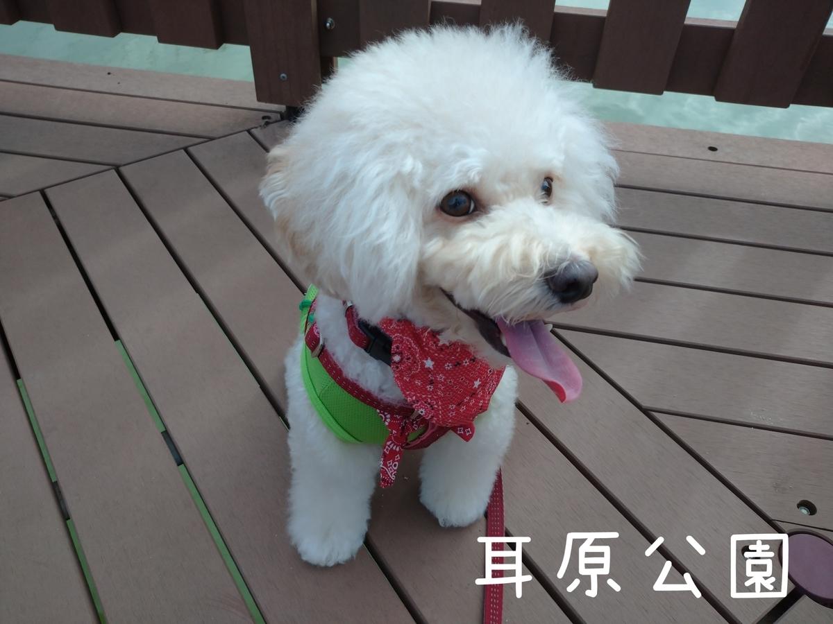 f:id:kotaro-dog:20210905202953j:plain