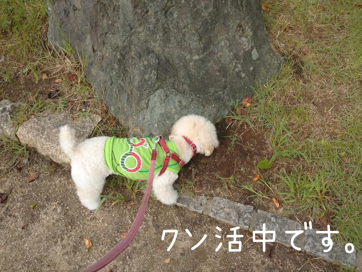 f:id:kotaro-dog:20210905210905j:plain