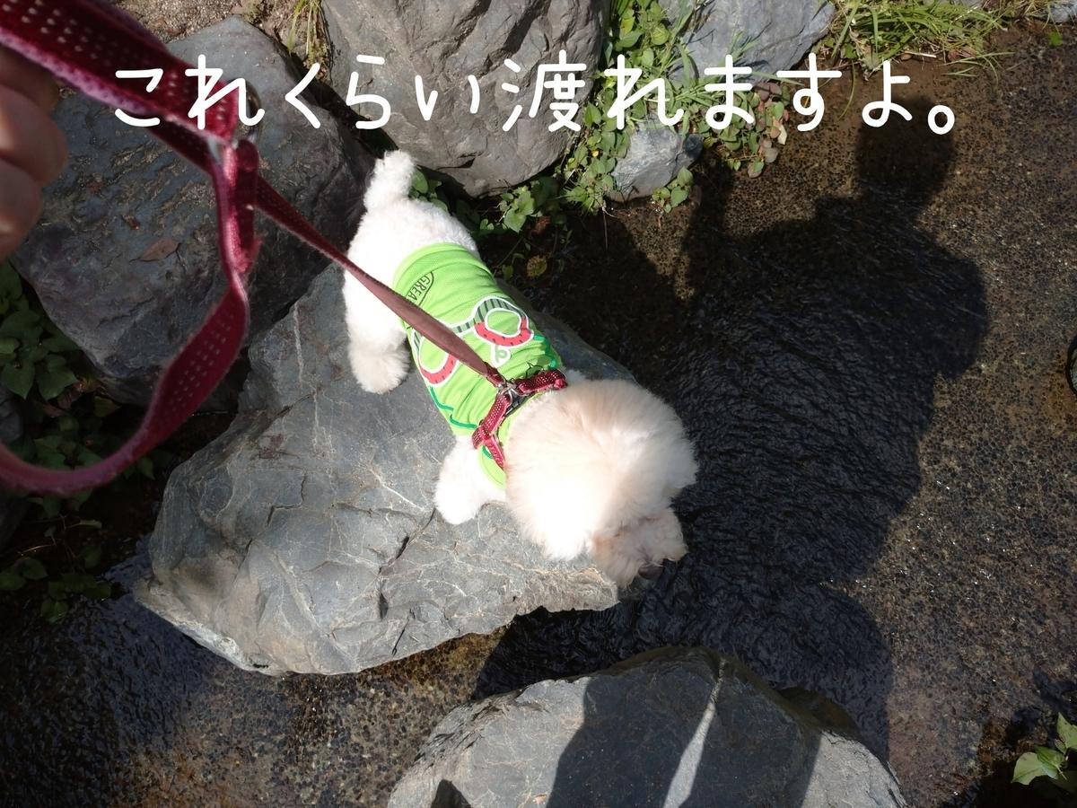 f:id:kotaro-dog:20210905211145j:plain