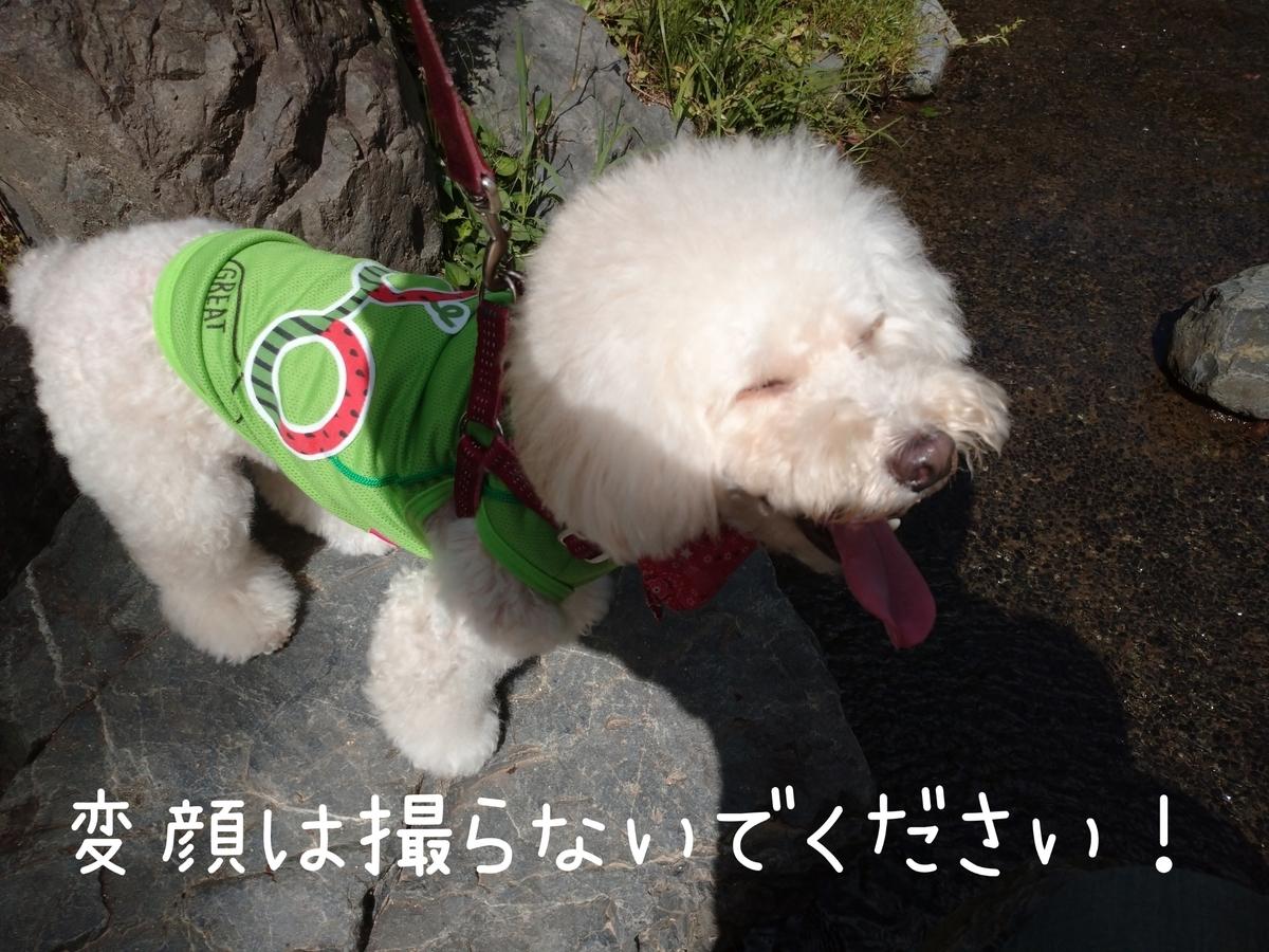 f:id:kotaro-dog:20210905211210j:plain