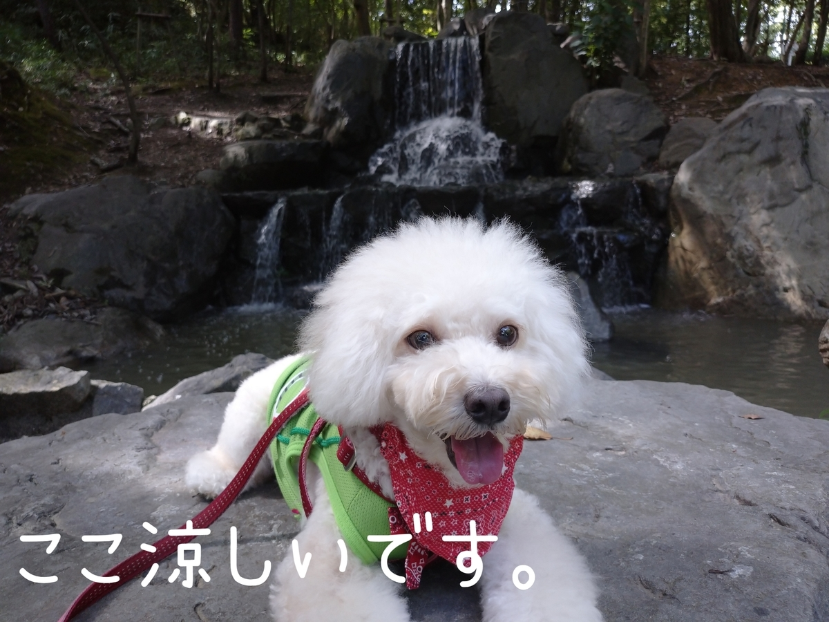 f:id:kotaro-dog:20210905211245j:plain