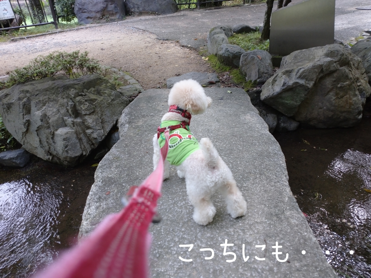 f:id:kotaro-dog:20210905211456j:plain