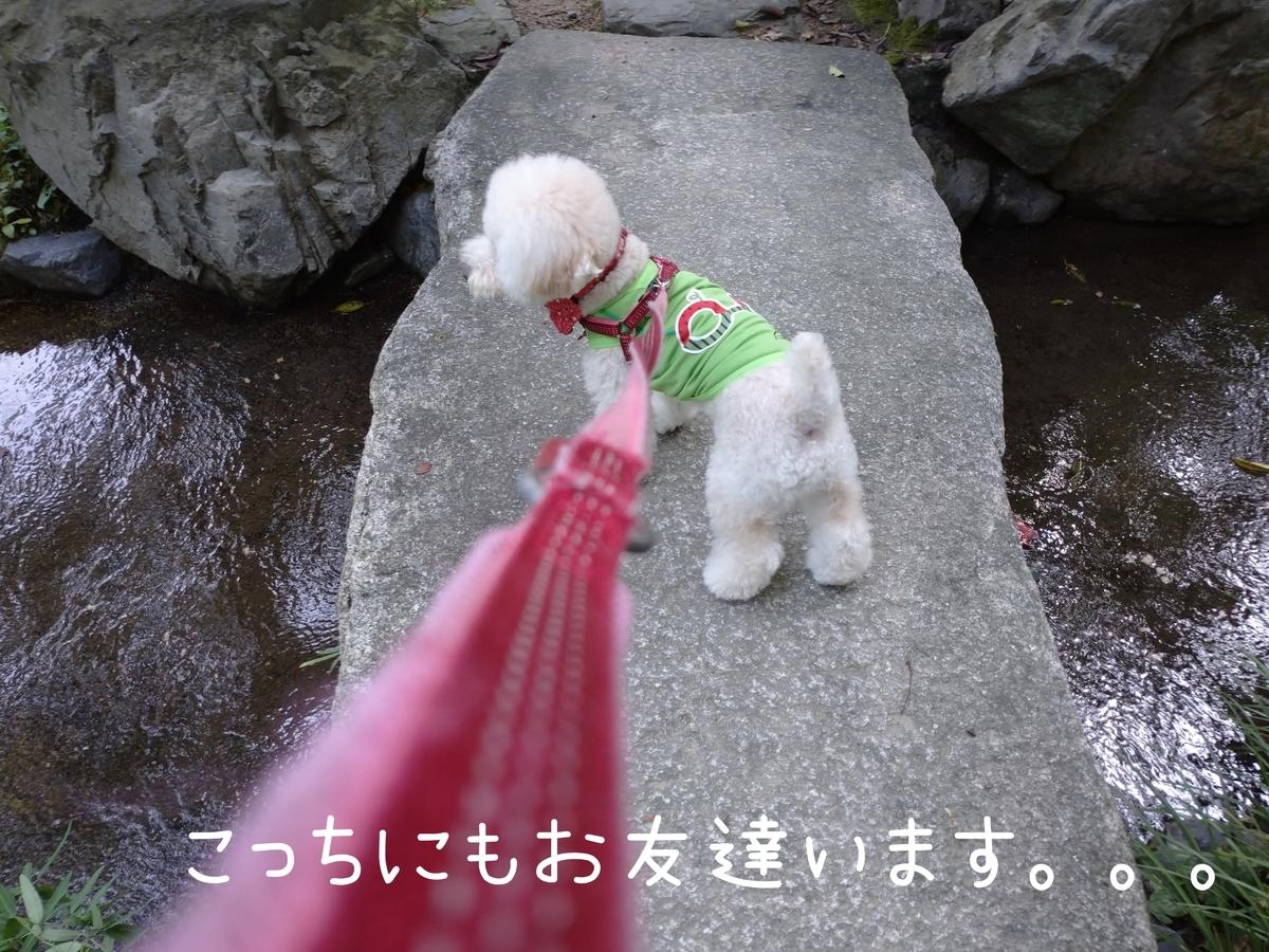 f:id:kotaro-dog:20210905211517j:plain