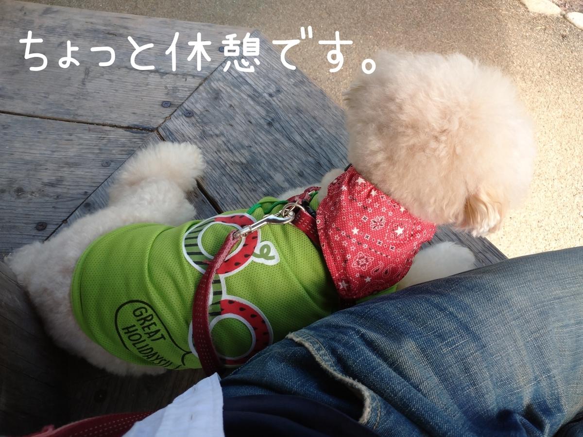 f:id:kotaro-dog:20210905211850j:plain