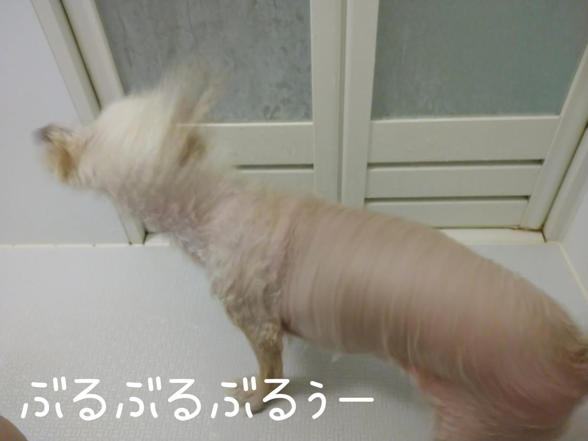 f:id:kotaro-dog:20210905212722j:plain