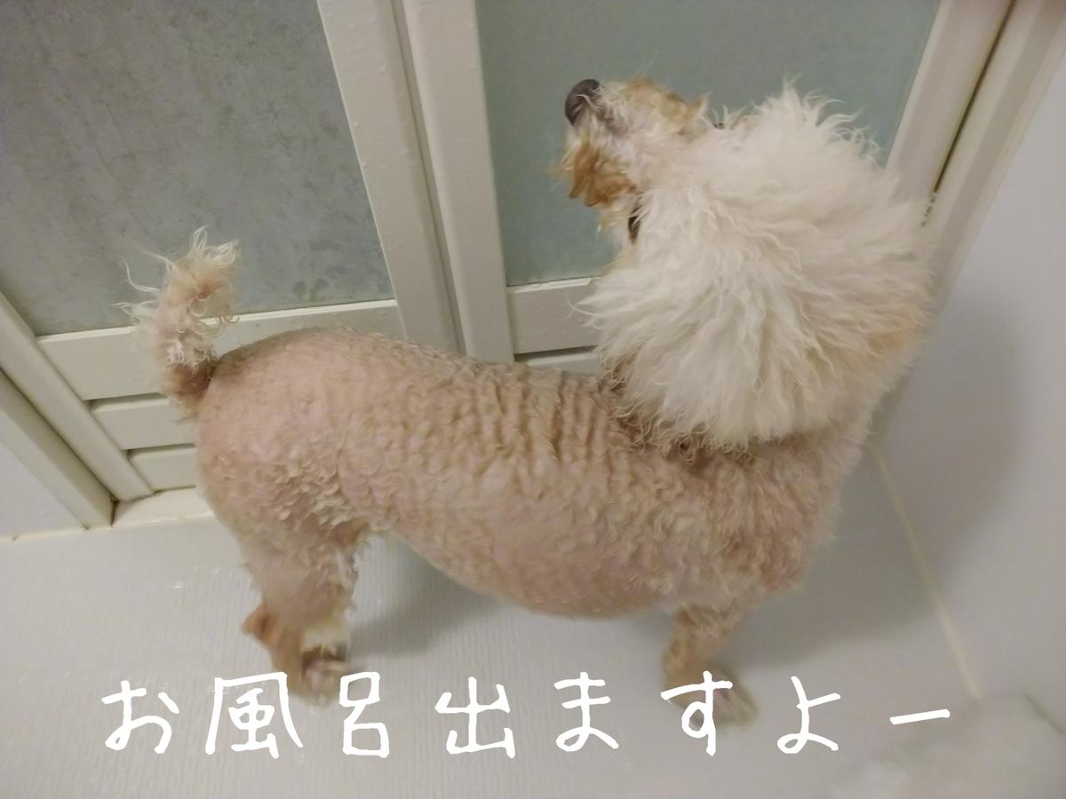 f:id:kotaro-dog:20210905212802j:plain