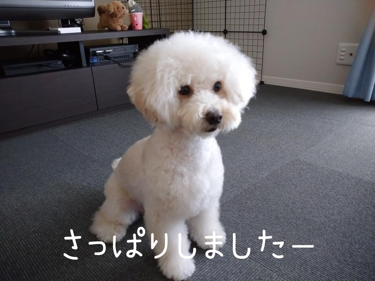 f:id:kotaro-dog:20210905212855j:plain