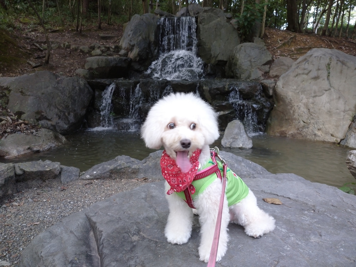 f:id:kotaro-dog:20210905214942j:plain