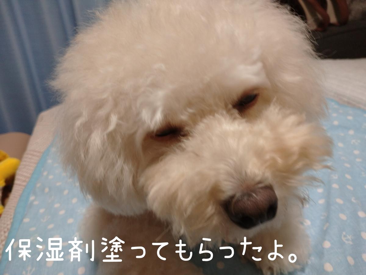 f:id:kotaro-dog:20210906234538j:plain