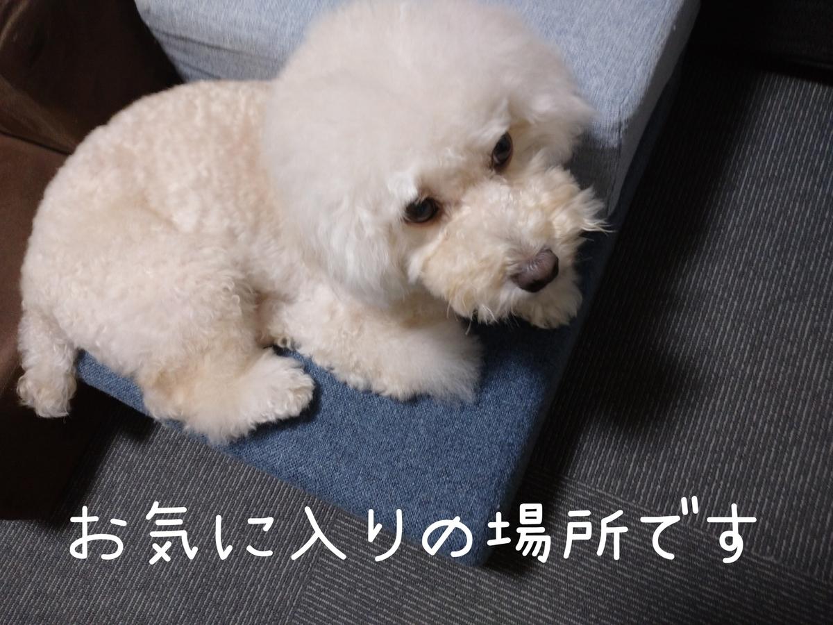 f:id:kotaro-dog:20210908233617j:plain