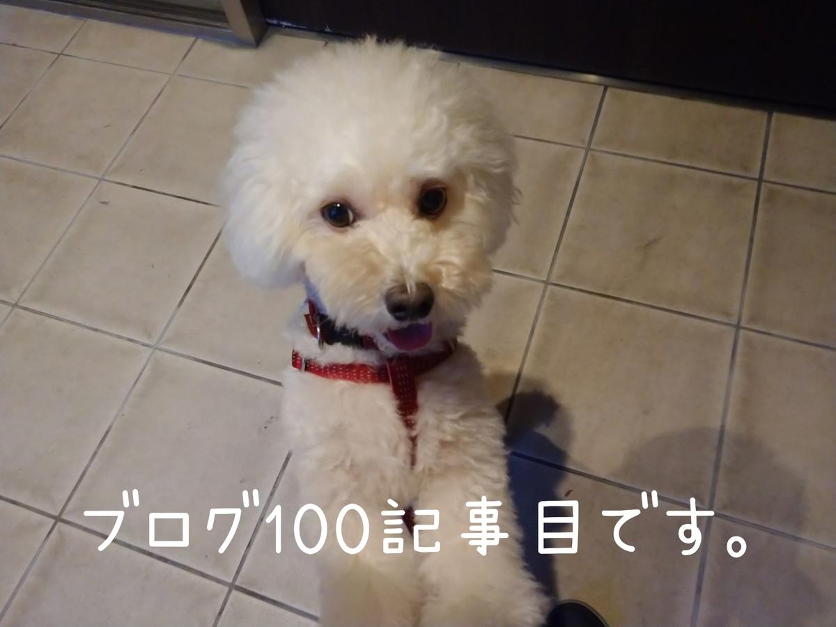 f:id:kotaro-dog:20210911203020j:plain