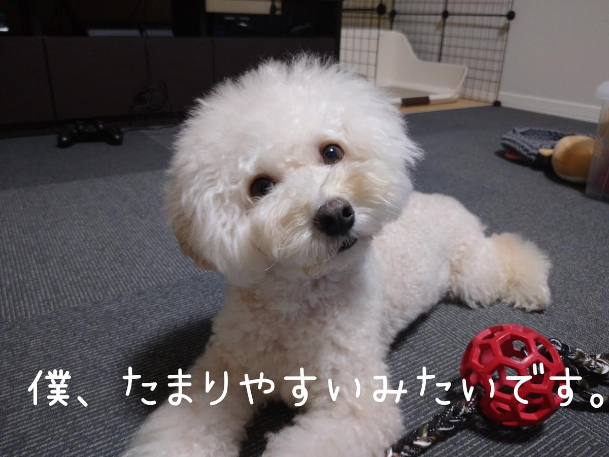 f:id:kotaro-dog:20210912020507j:plain
